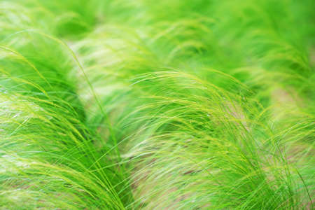 clump: Clump of green grass on the field.