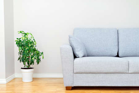 living room design: Gray sofa and green plant. Room interior.