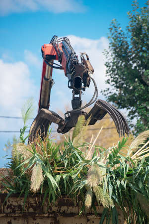 manipulator: Remote manipulator collecting trees near the road.