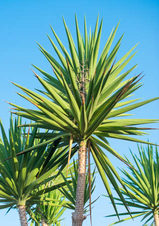 blue green background: Green palms on the blue sky background.