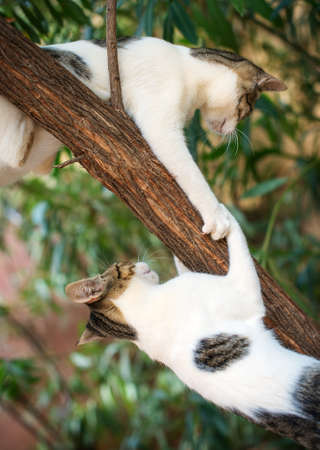 dangerous love: Two cats climbing on the tree. Stock Photo