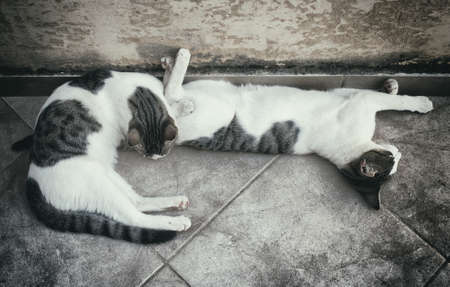 hobo: Two homeless cats resting on the street.