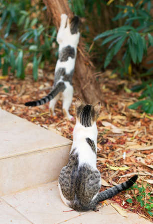 spectating: Cat sharpening its claws, another is spectating. Stock Photo