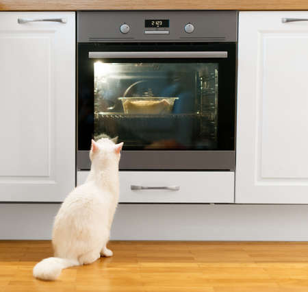 curiousness: White cat is watching food in the oven. Stock Photo