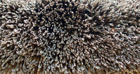 thatched: Thatched roof top texture. Suitable for background. Stock Photo