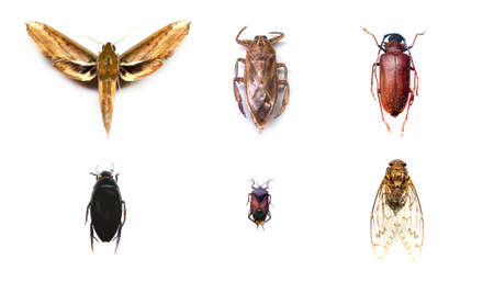 Collection of insects on isolated white background. Stock Photo