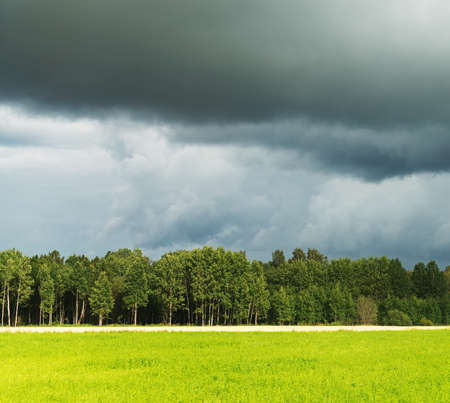 Forest with storm clouds before rain.