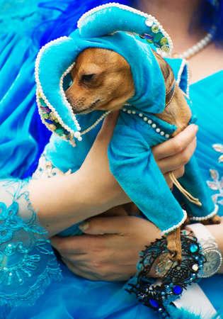 elves: Dog in jester hat on street carnival.