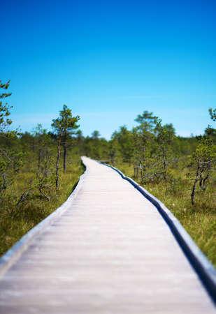 Wooden walkway on the swamp. Viru Raba, Lahemaa park, Estonia.
