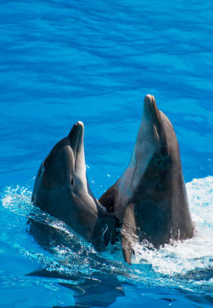 Two dolphins dancing in water. Place for text. Stock Photo