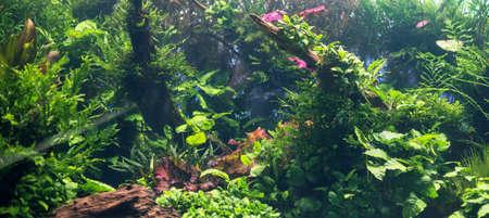 amano: Beautiful freshwater green aquarium with plants.
