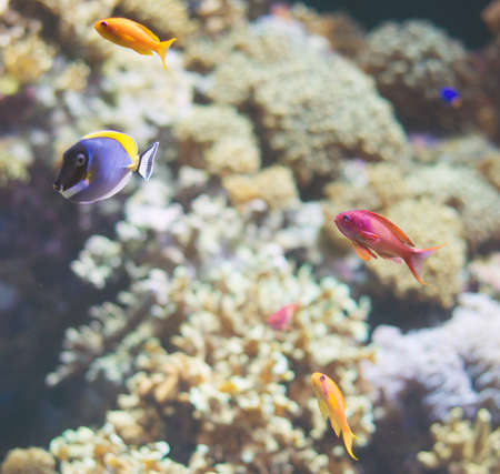 Bottom of the sea with corals and fishes.