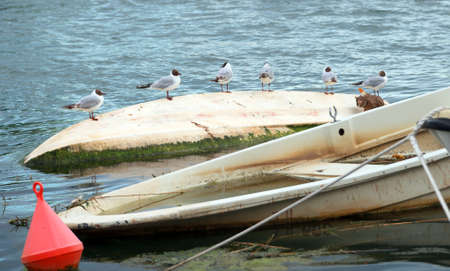 Six seagulls sit in an upturned boat in the sea.