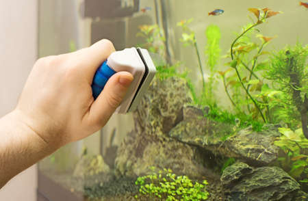 Male hand cleaning aquarium using magnetic cleaner. Foto de archivo