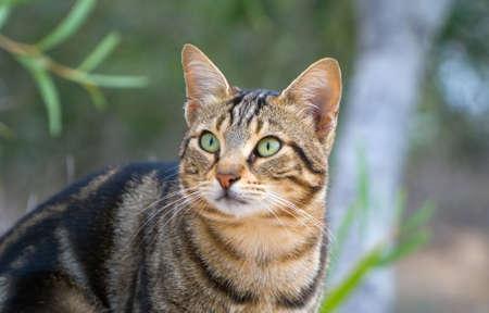 Cute street cat portrait in Cyprus.