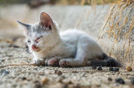 Homeless kitten abandoned on the street.