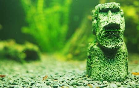 Small Moai statue in the freshwater aquarium. Фото со стока