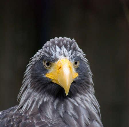 Close up of a eagle photo