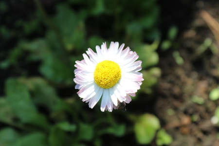 close up: flower close up Stock Photo