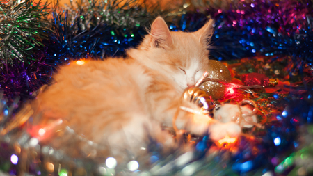 The cat is lying in the Christmas toys and glowing lights.