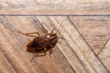 Cockroach crawling on the floor Stock Photo