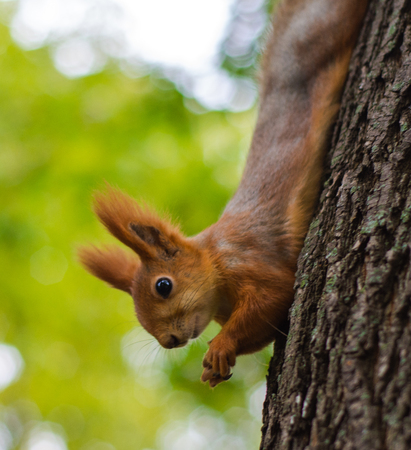 Squirrel chews food in the Park Banco de Imagens