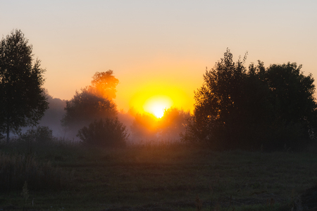 The suns rays Shine through the fog in the summer morning at dawn in a field with trees