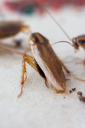 Cockroaches close up Stockfoto