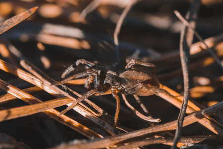 Macro photo of spider in the forest