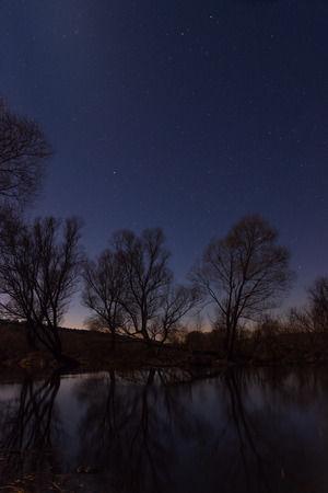 Tree by the river starry night in the moonlight