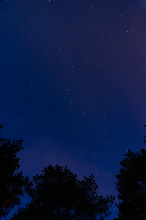 The tops of pines against the starry sky at night in the forest