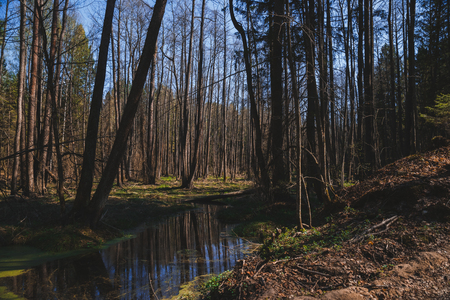 Forest in spring on a Sunny day