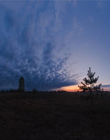 Large panorama of the morning scarlet dawn on the edge of the forest in the spring