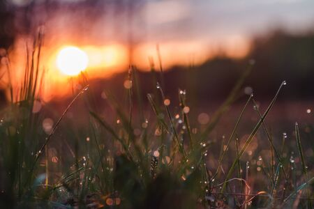 Dew on the grass at dawn in spring