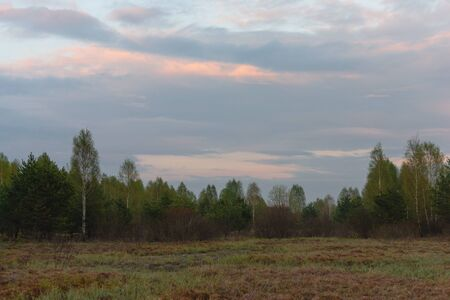 A small fog at the edge of the forest at sunset after rain 写真素材