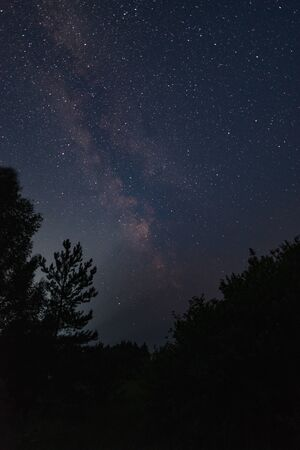 Milky way over the forest summer night
