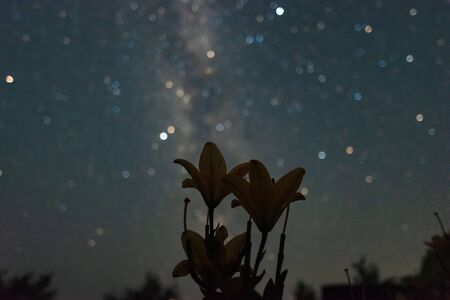 Flowers Lilies on a background of a starry sky on a summer night Banco de Imagens - 129423597