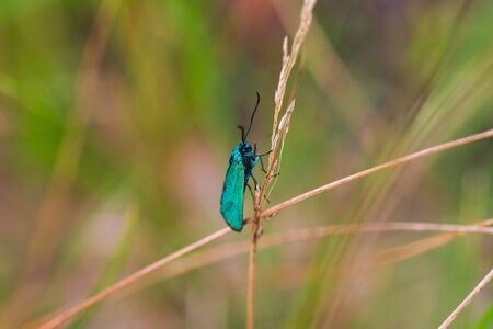 Green butterfly sitting on a blade of grass Banco de Imagens