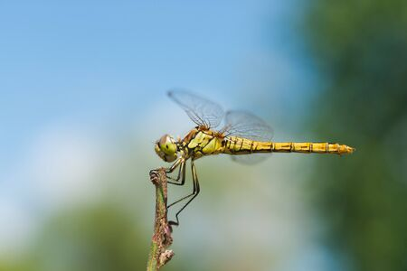 Macro photo of a dragonfly sitting on a blade of grass