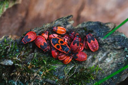 Bug firefighters gathered in a bunch