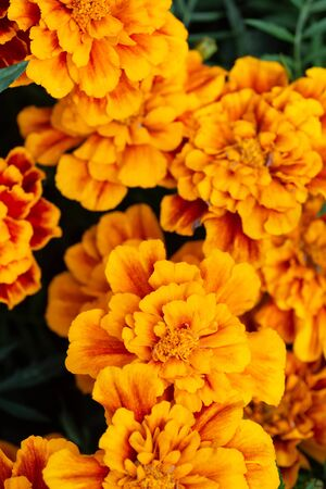 The texture of the orange flowers