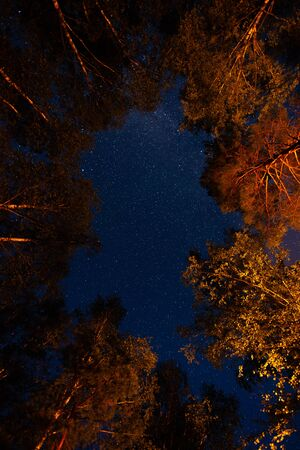Bottom view of the starry sky in the night forest Banco de Imagens