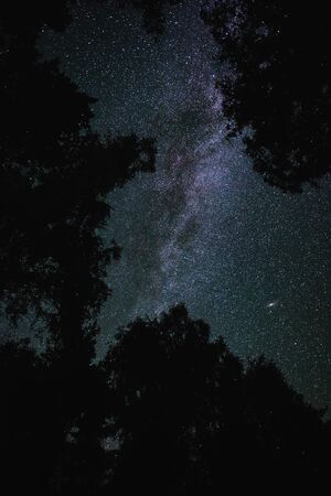 Bottom view of the starry sky with the milky way in the night forest