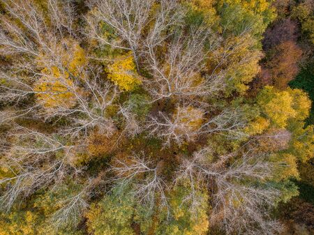 Aerial view: Autumn forest from a height with orange, green and yellow leaves. Banco de Imagens