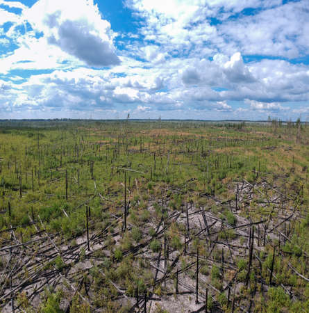 A large panorama of the view from the height of the burned forest a couple of years ago. The consequences of a forest fire from a height.