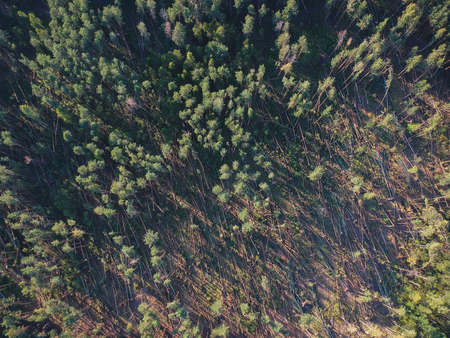 A view from a height of a fallen forest after a hurricane in Russia