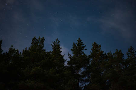 stars among the clouds illuminated by the moonlit sky in the night sky in the pine forest