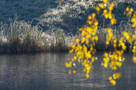 atmospheric phenomena: On the bank of a pond of the ice covered with a crust. First morning frosts late fall. Stock Photo