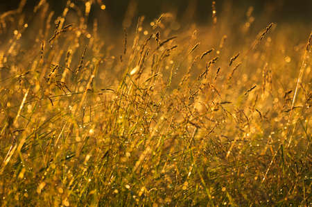 Meadow herbs after a rain in evening light at sunset Stock Photo