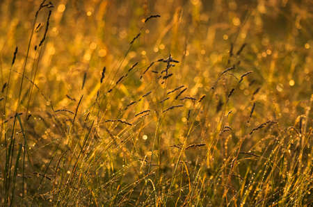 The tending meadow herbs after a rain at sunset Stock Photo